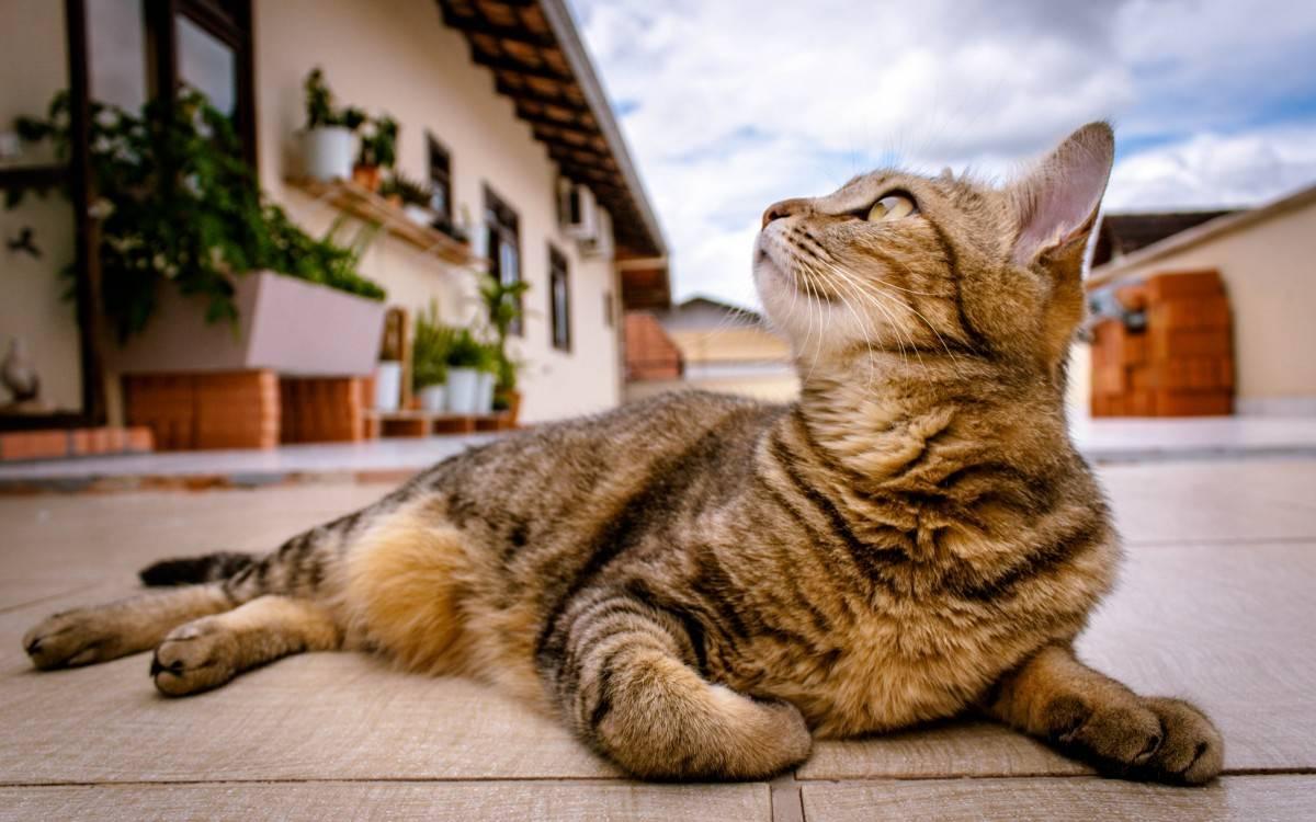 5 самых знаменитых котов