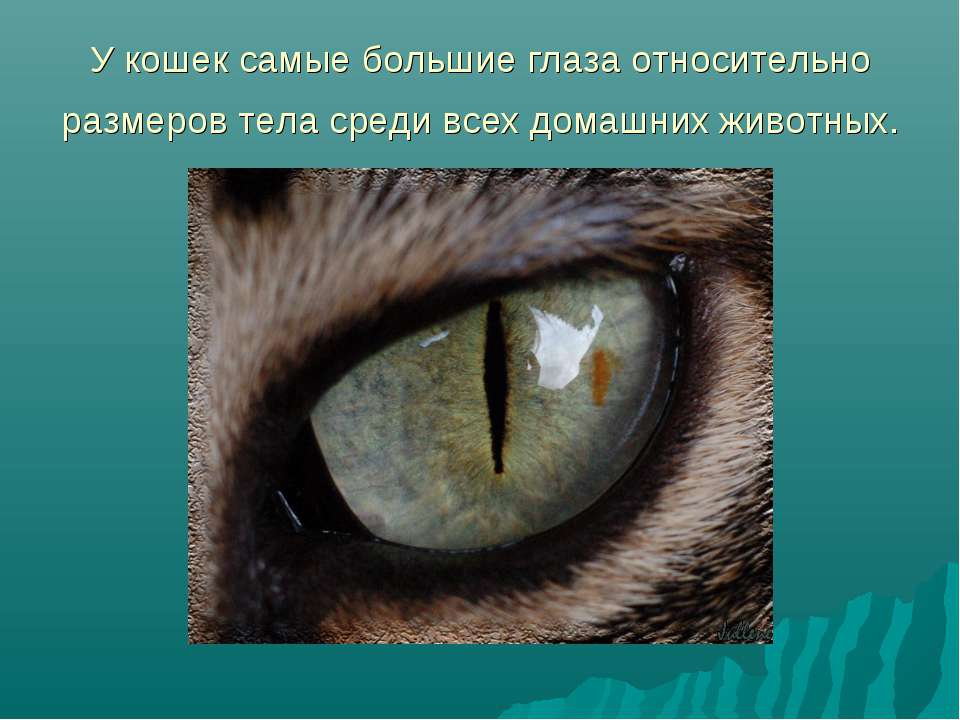 Как видят собаки окружающий мир: научные факты о зрении животных
