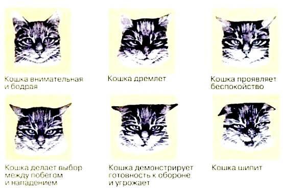 Как влияет порода и окрас на характер котов?