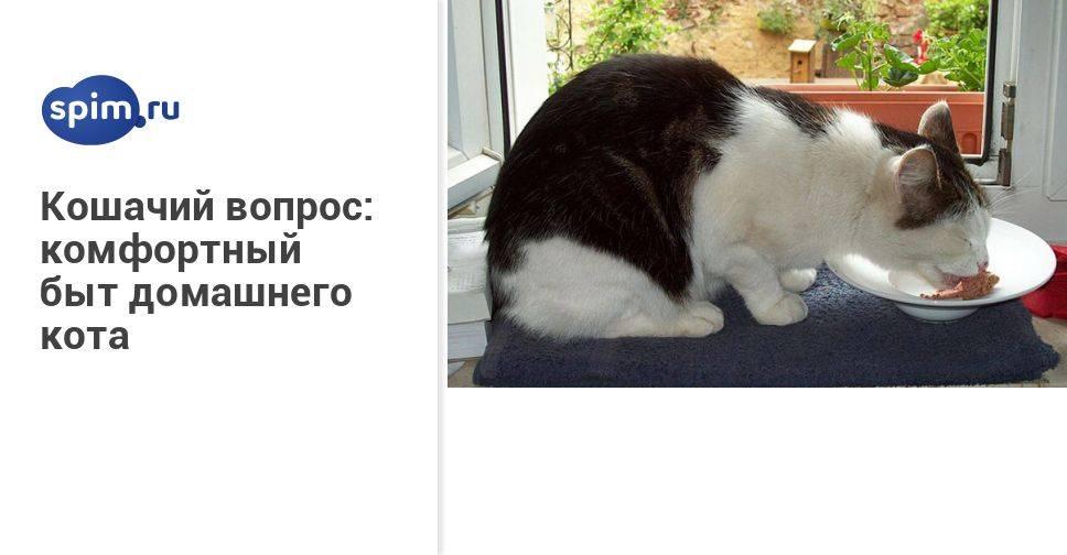 Кошке лучше дома или на улице: что говорят ученые? - wikipet