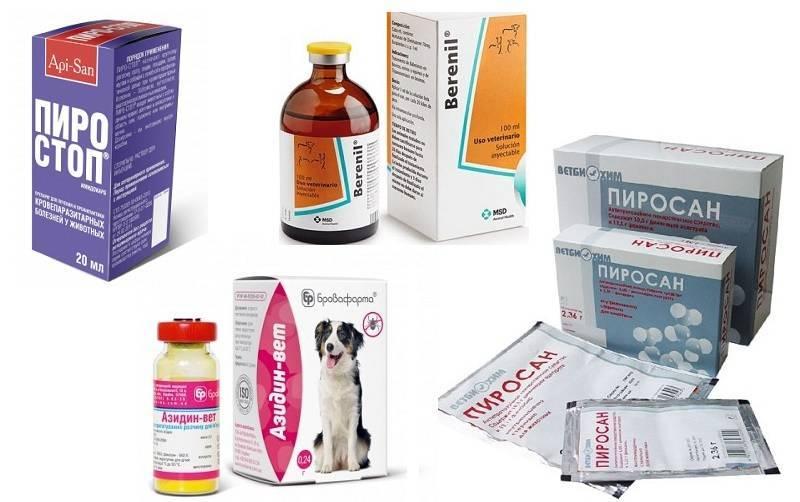 Профилактика пироплазмоза у собак