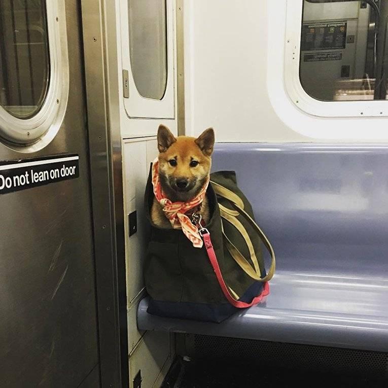 Как перевозить собаку в метро по правилам