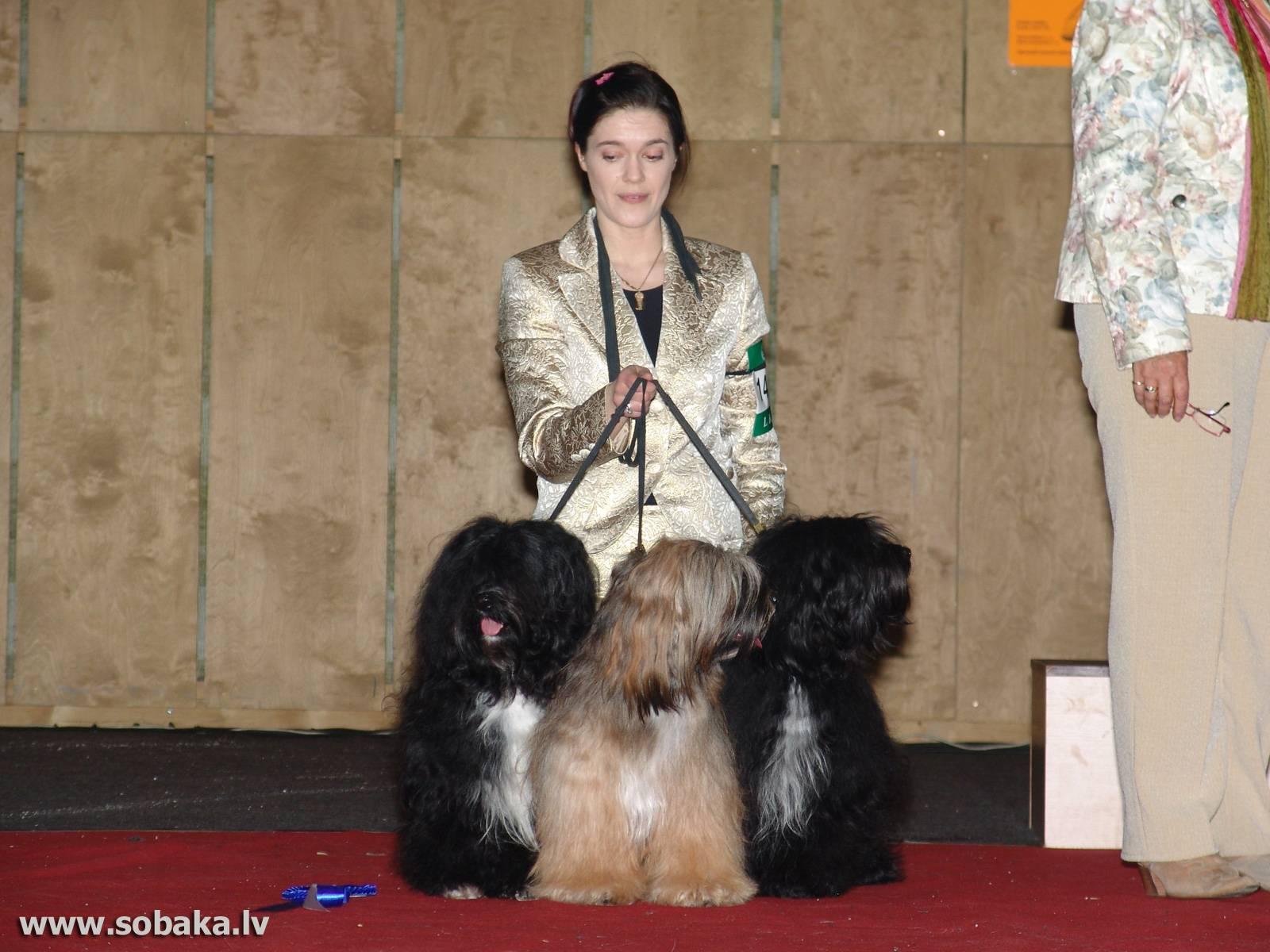 Тибетский терьер: описание породы и секреты содержания собак