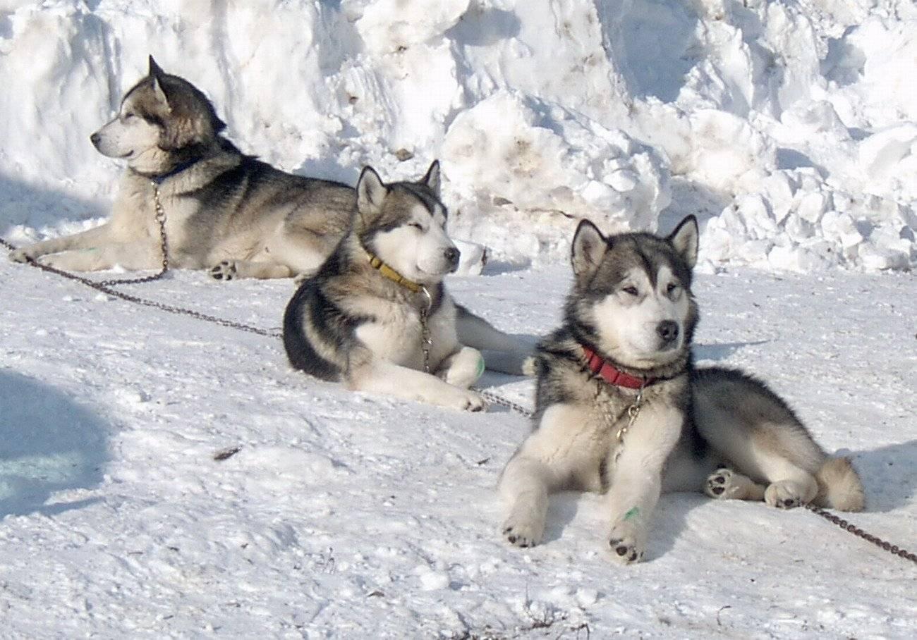 Топ-20 квартирных пород собак. фото и описание