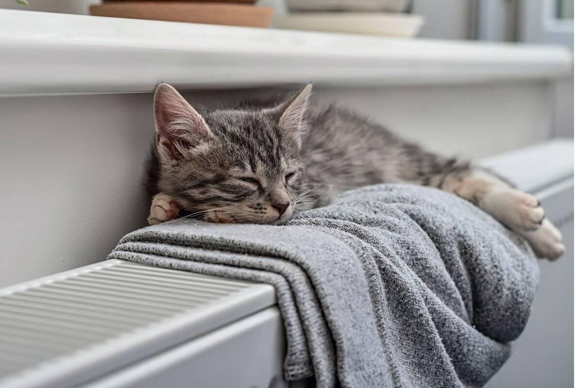 Ошибки владельцев кошек, которые сокращают жизнь питомца