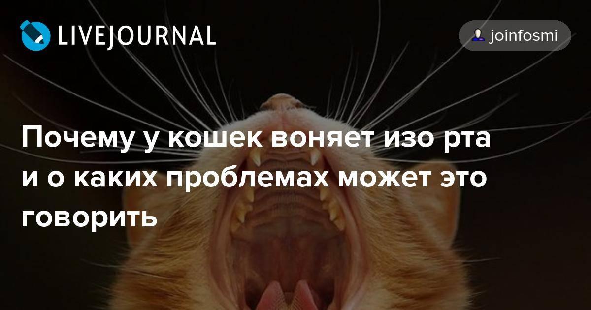 Почему у котенка пахнет изо рта 10 причин. автор ветеринар   дети фауны