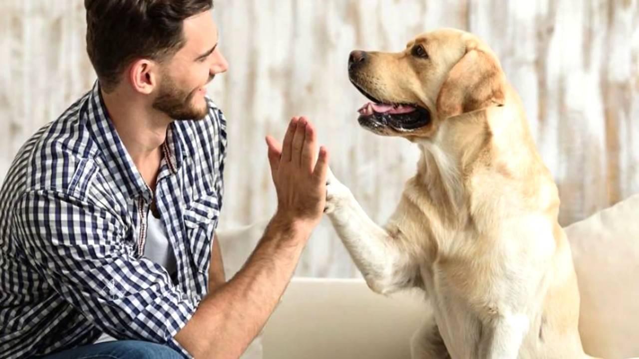 Что происходит, когда собака облизывает ваше лицо - причины, последствия и как отучить животное