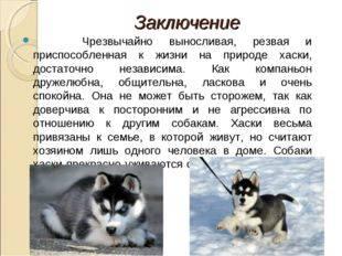 Особенности ухода и содержания щенка сибирского хаски