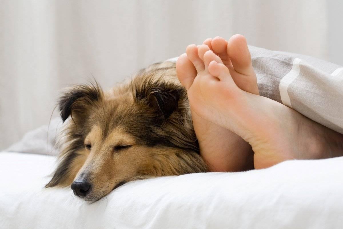 Спать с собакой или с кошкой: польза и вред для хозяина