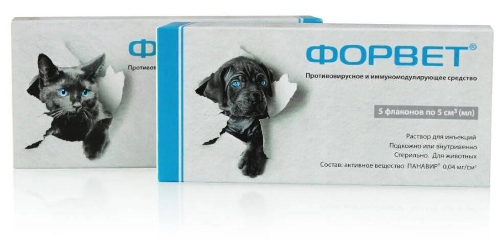«форвет» для собак и кошек: инструкция по применению