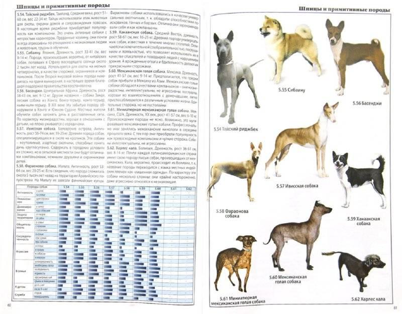 Происхождение домашней собаки или доисторический детектив.