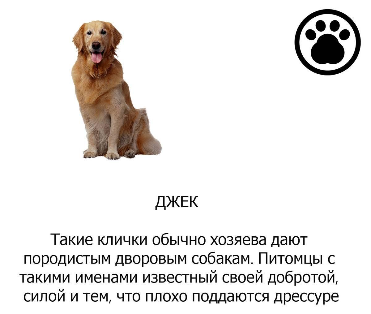 Как выбрать кличку для собаки-мальчика?