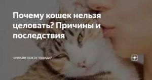 Как кошки воспринимают людей? почему кошки мнут лапами человека