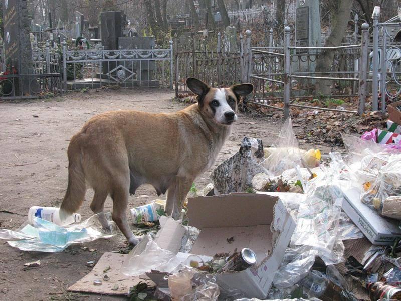 Вещи, которые могут нанести непоправимый вред желудку собаки