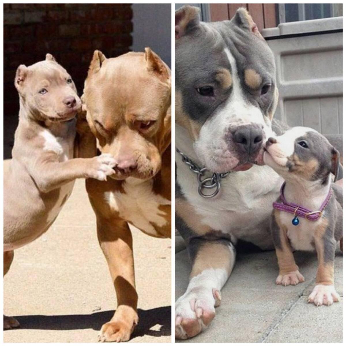 Самые спокойные породы собак — топ-10 с фото, названиями и описанием