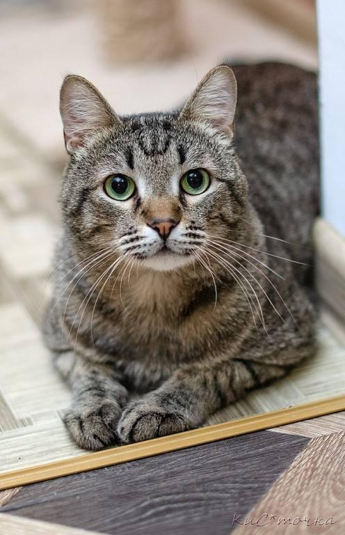 Какие породы кошек самые умные в мире? — список, характеристика и фото