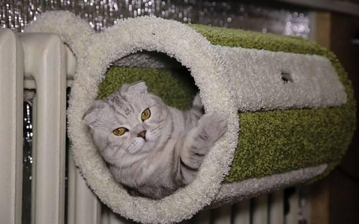 Лежак для кошки своими руками.: дневник пользователя ms_alexandra