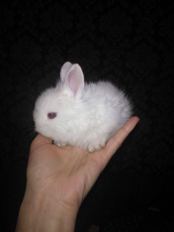 Как назвать кролика: лучшие имена для кроликов