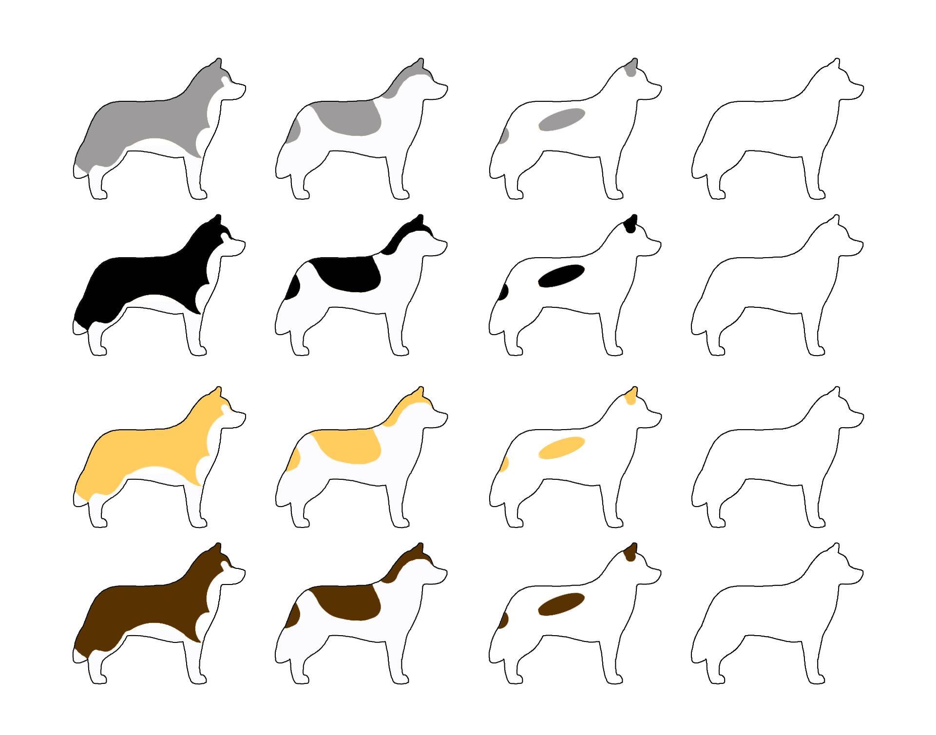 Джек-рассел-терьер: черный, белый, коричневый, трехцветный и другие окрасы