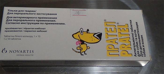 Прател для собак: инструкция по применению и отзывы
