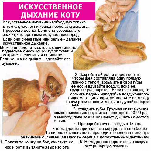 Что делать, если собака задыхается