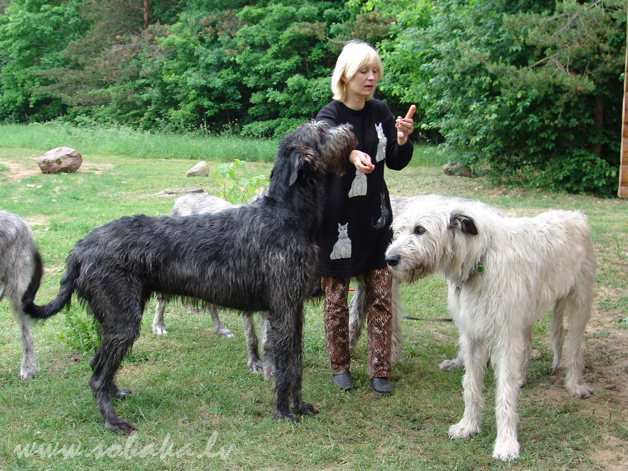 Крупные породы собак. описания, названия и фото собак крупных пород | животный мир