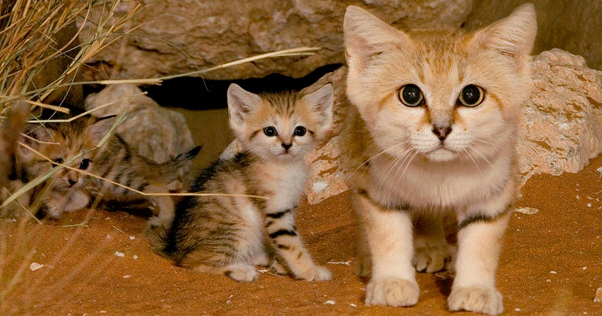 Описание самых необычных и экзотических пород котов и кошек