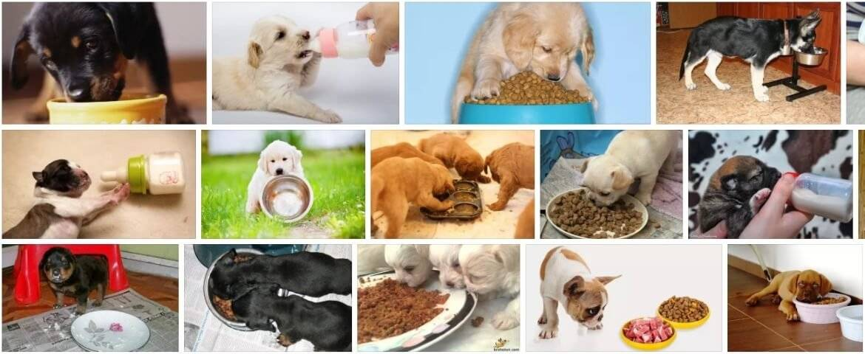 Натуральное кормление собаки: как правильно кормить естественной пищей, какими крупами и какой кашей лучше, можно ли свининой, рыбой, курицей и другим мясом
