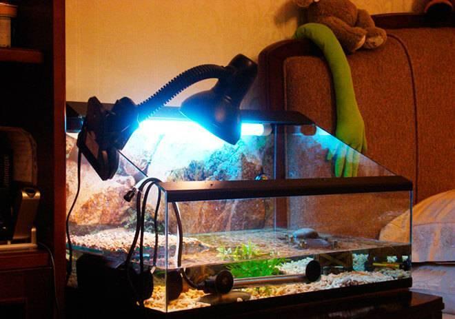 Какие лампы нужны для черепах? зачем черепахам уф лампа?