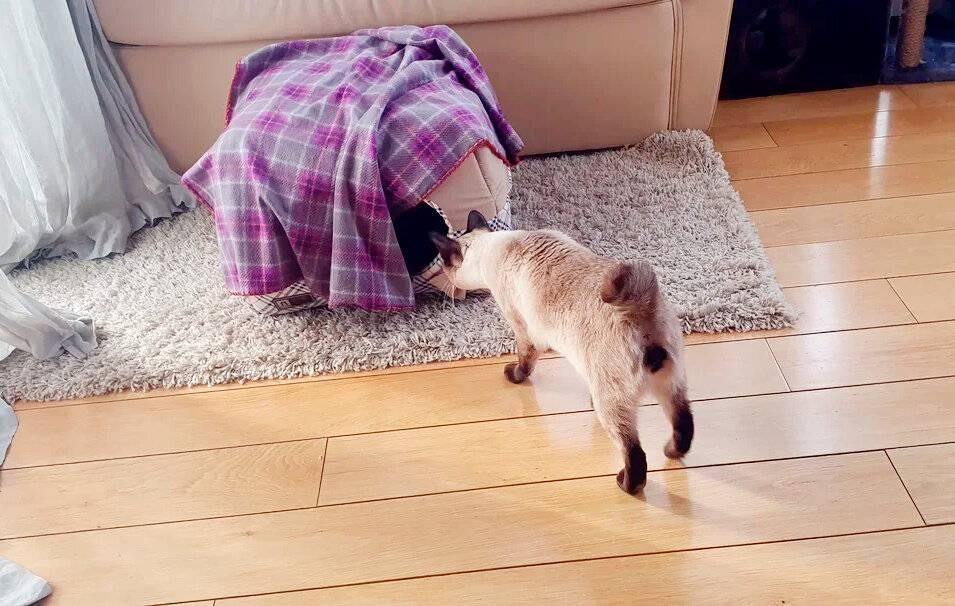 Норма веса кошки: как поддерживать здоровый вес кота?   perfect fit™