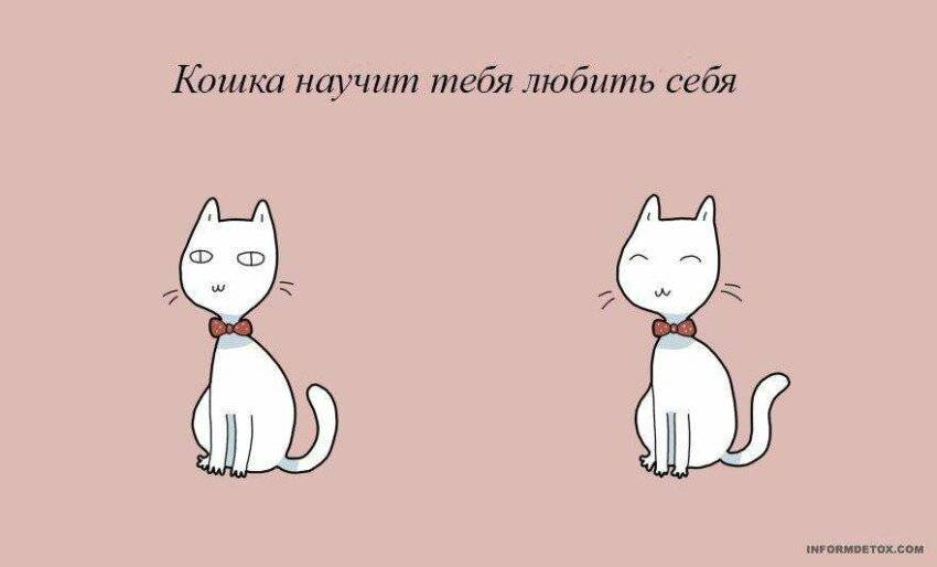 Две кошки в одной квартире, как подружить?