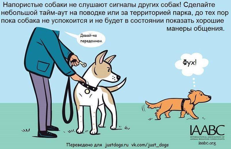 11 вещей, которые собаки ненавидят в общении с людьми