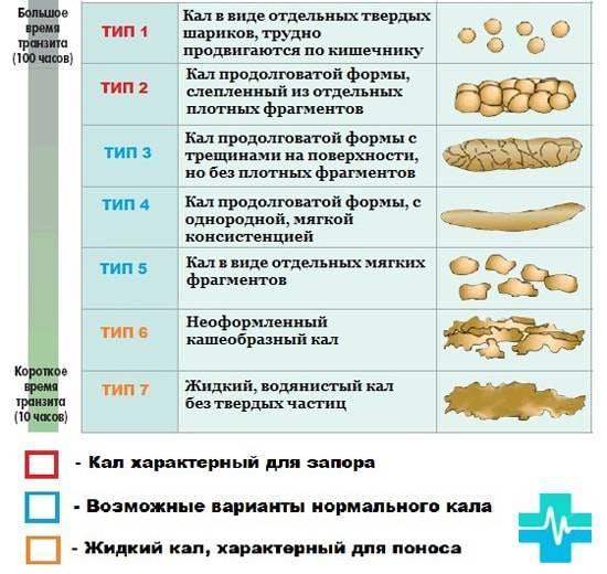 Диарея (понос) у собаки: причины, лечение, возможная опасность и список препаратов