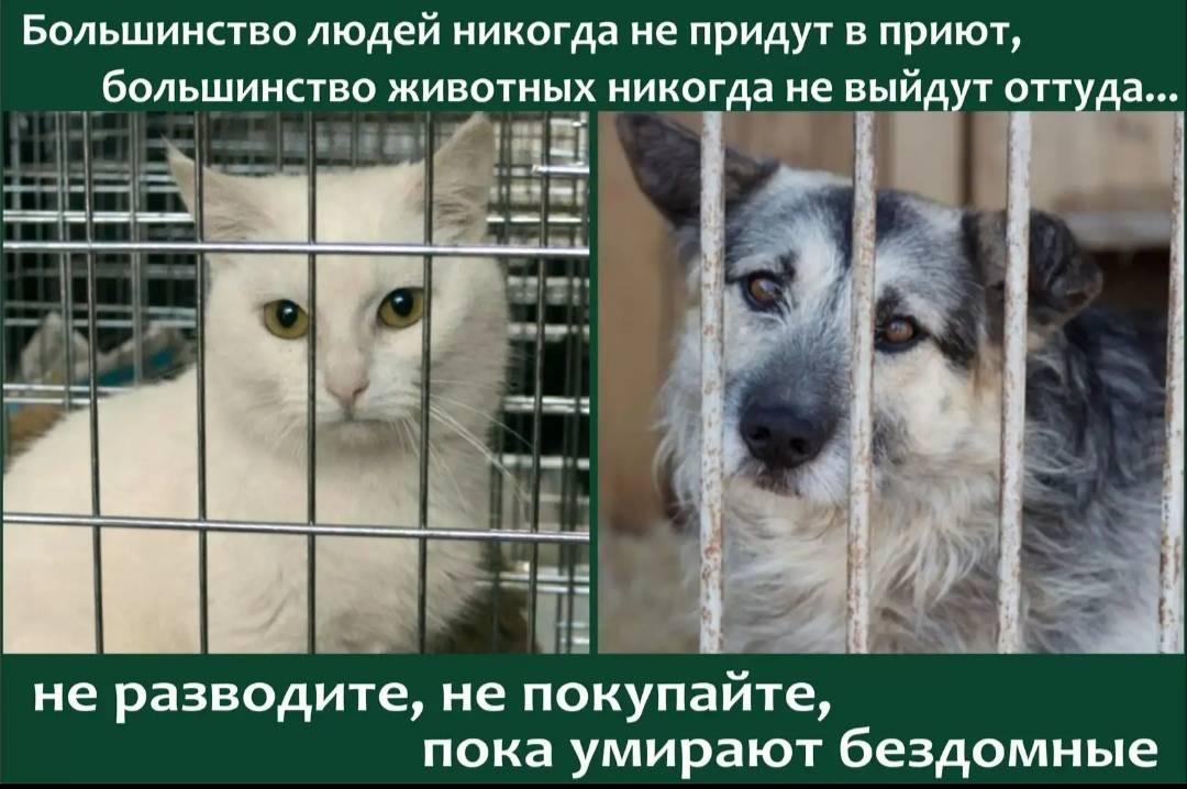 Адаптация собаки из приюта к новой семье: этапы