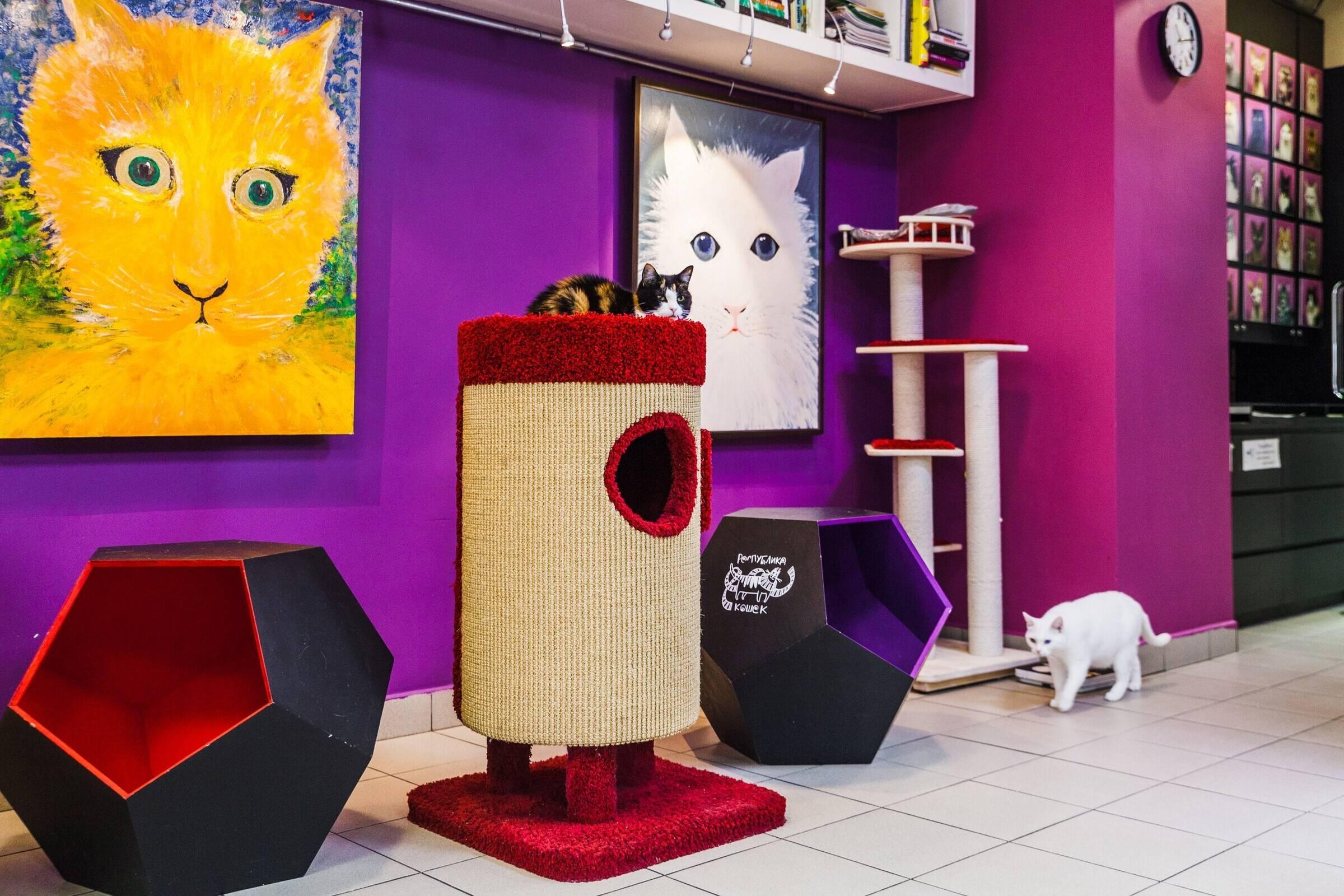 Котокафе «республика кошек» всанкт-петербурге. музей на якубовича, сайт, фото, отзывы, отели рядом, как добраться на туристер.ру