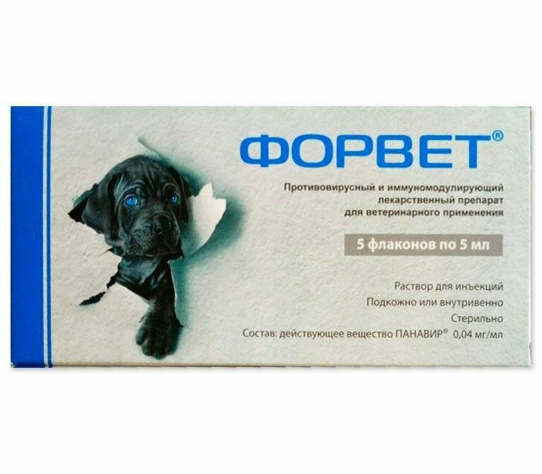 Форвет для собак: инструкция по применению, противопоказания и польза
