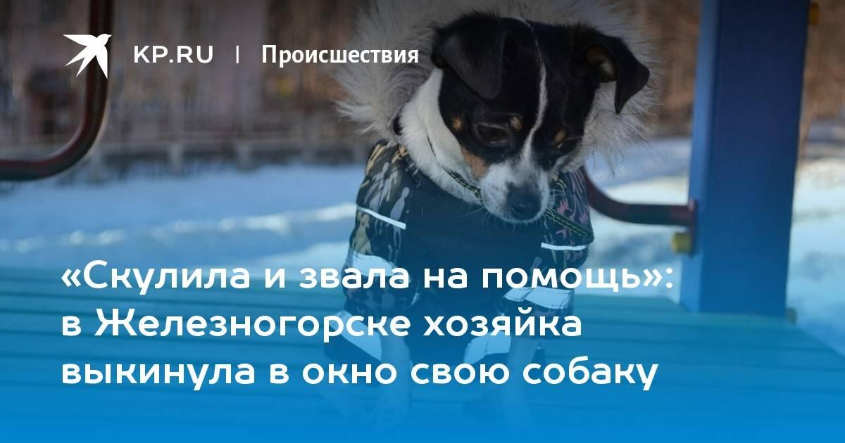 Почему собака скулит, грызет мебель и боится петард? 6 вопросов о поведении собаки. почему собака скулит, лает, боится салюта и ездить в машине?
