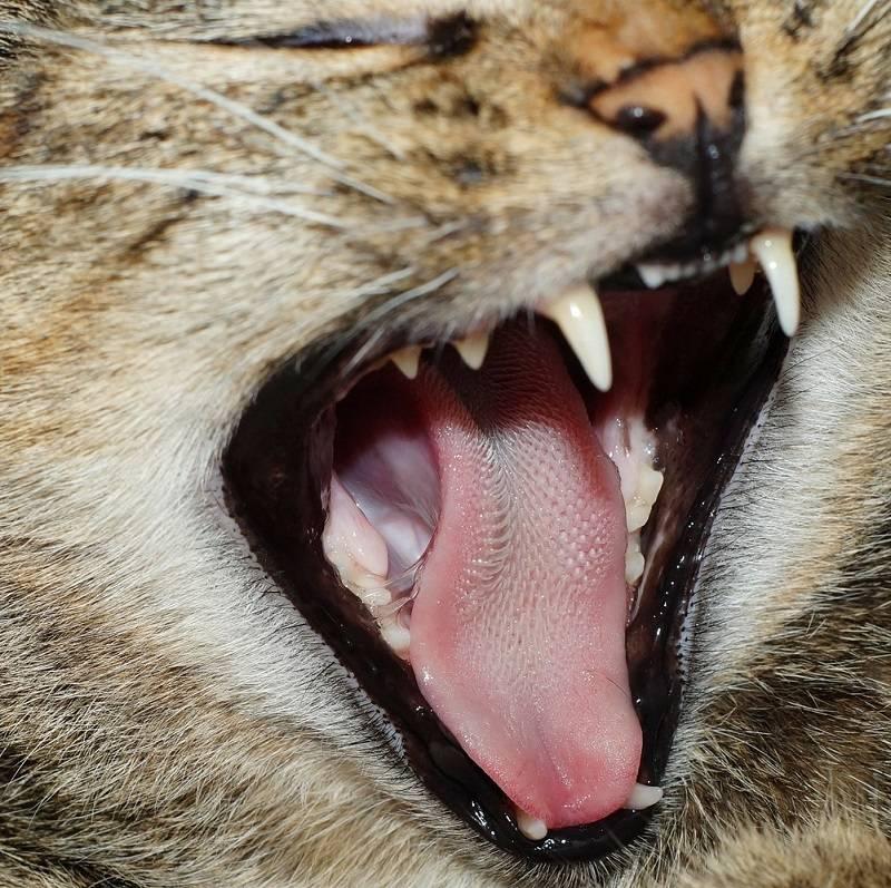 Почему у кошки шершавый язык - мамин советник