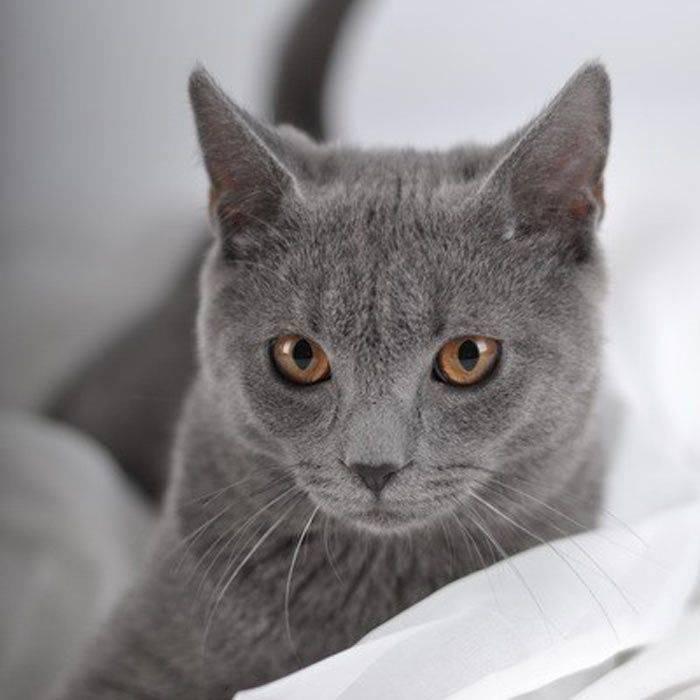 Картезианская кошка: француженка с улыбкой джоконды