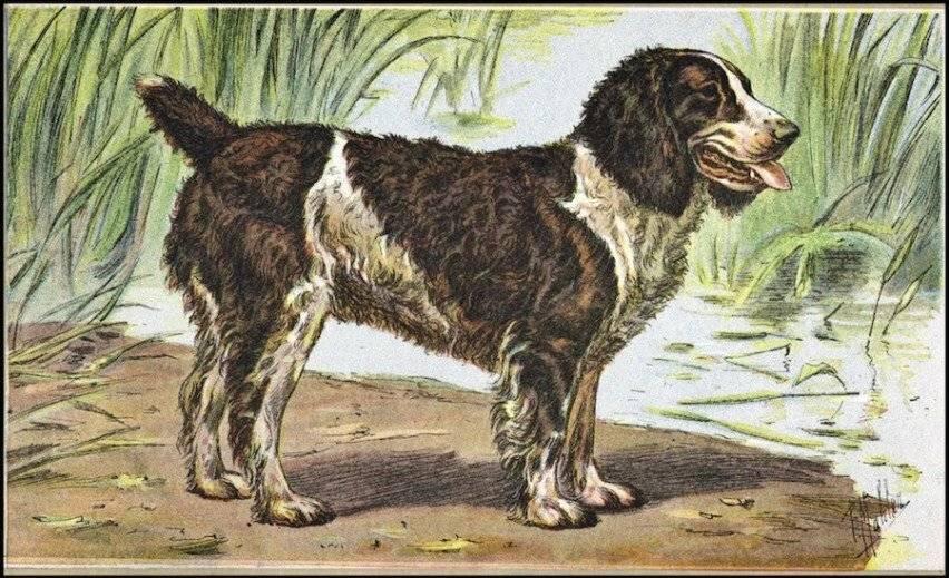 Вымирающие породы собак: собаки, которые скоро исчезнут с лица земли (фото)