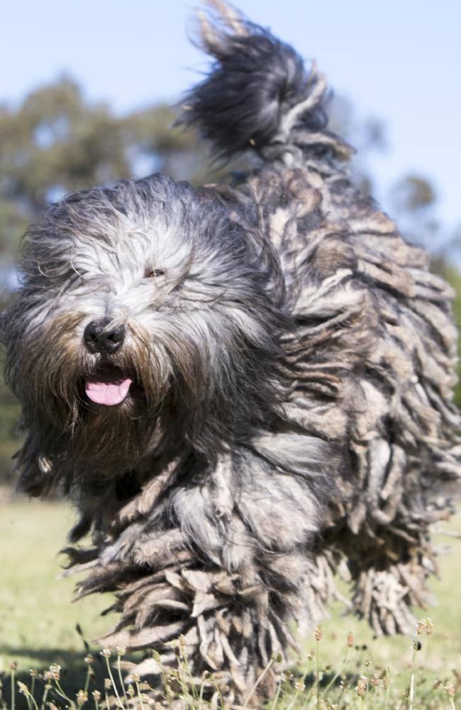 Самые необычные породы собак в мире: странные, редкие и интересные