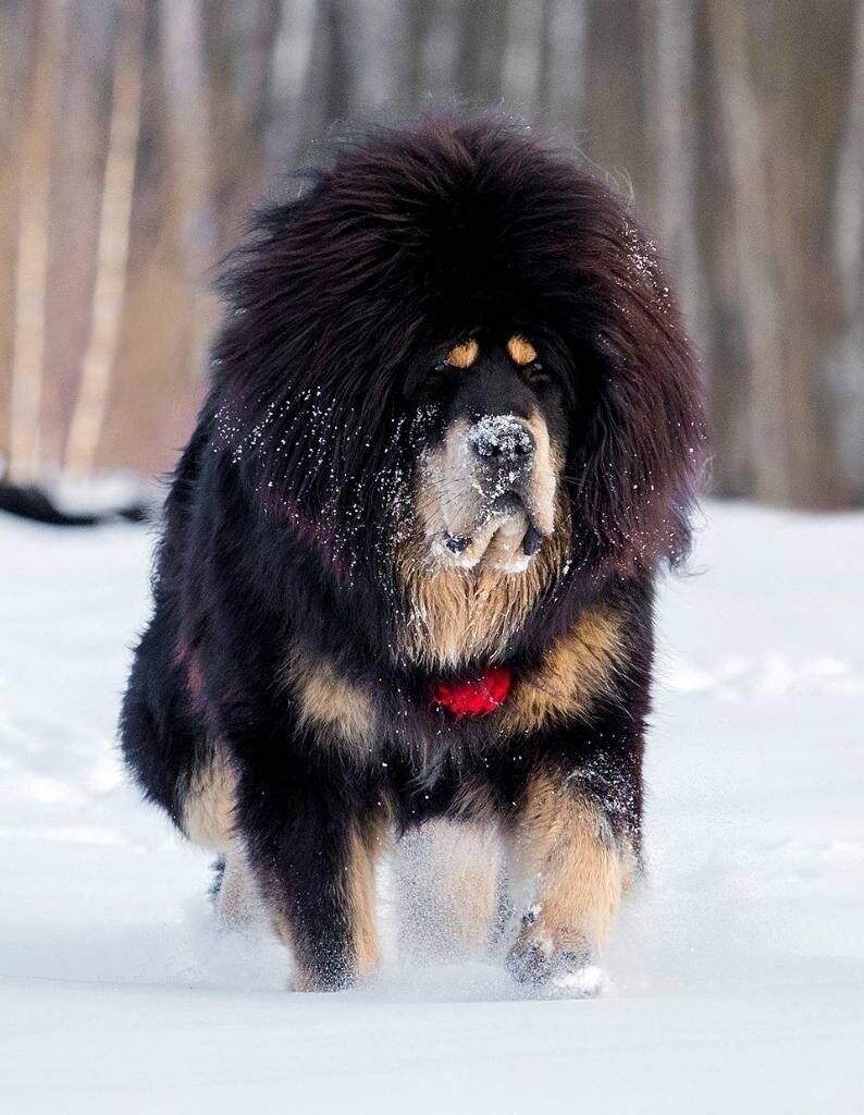 Популярные породы собак