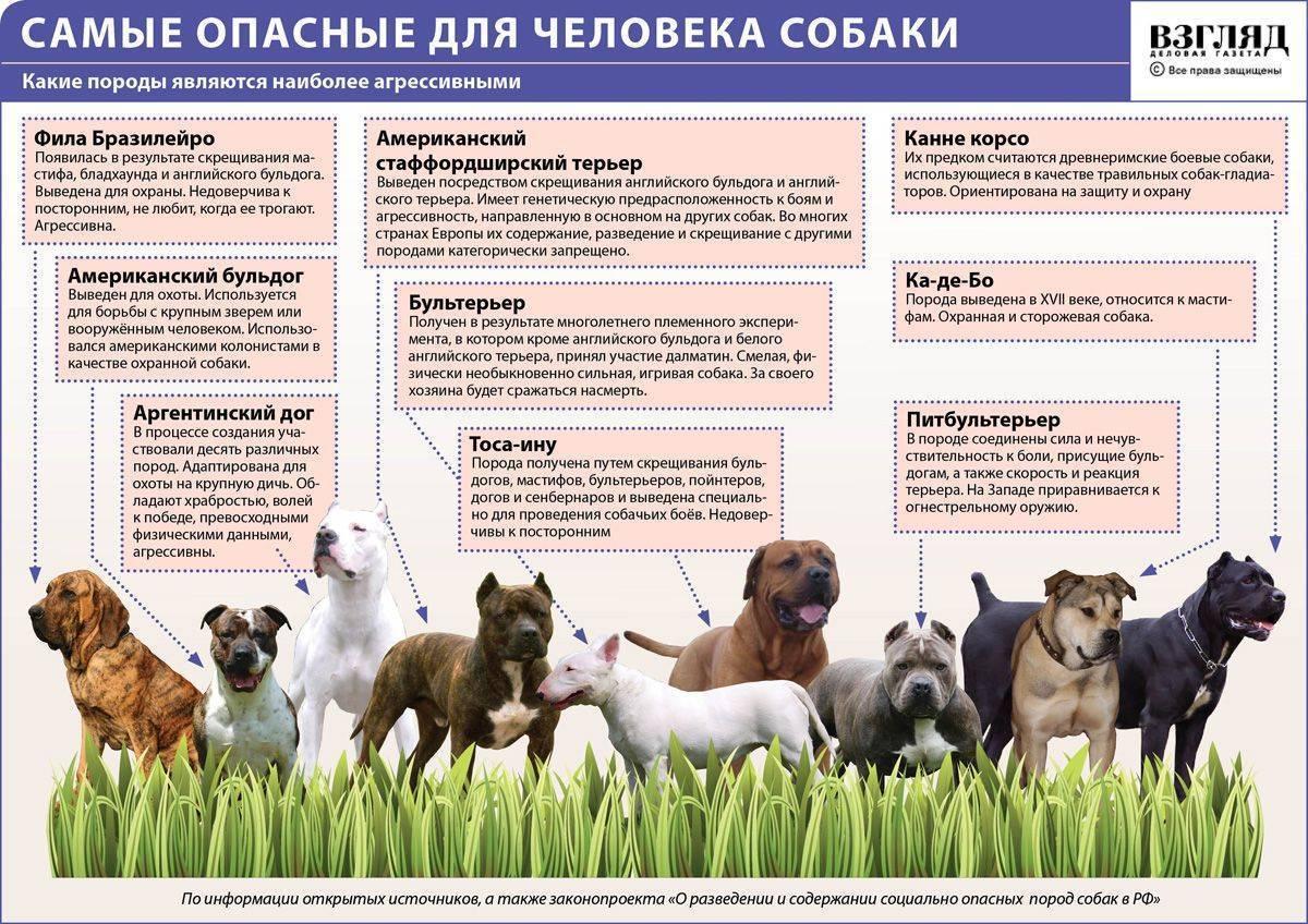 Ландсир — фото, цена щенков, описание породы