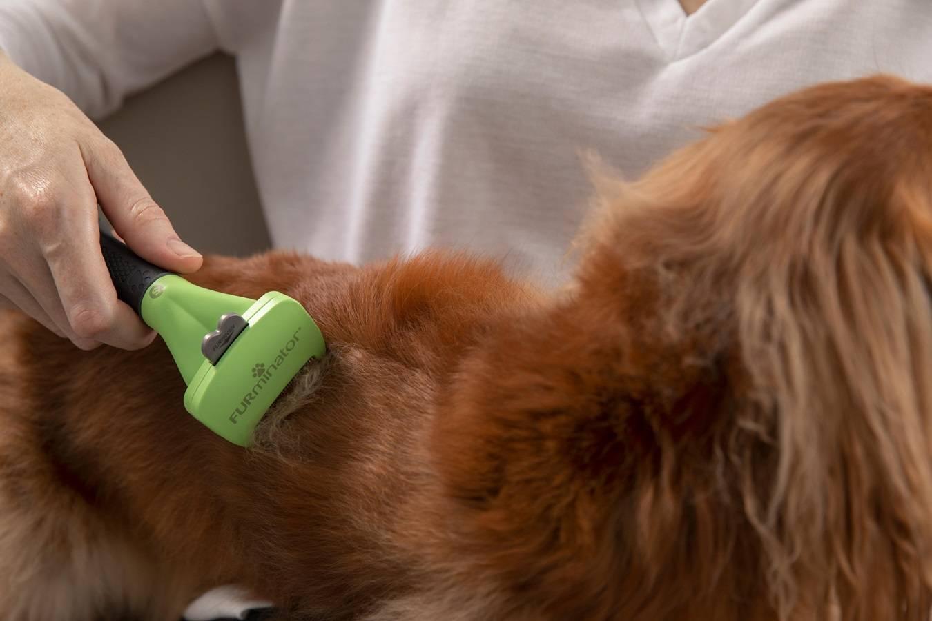 Линька у собак и кошек - ветеринар-дерматолог