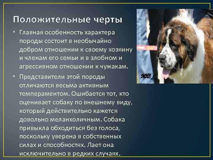 Московская сторожевая: характеристика внешнего вида и описание характера, особенности содержания и фото породы