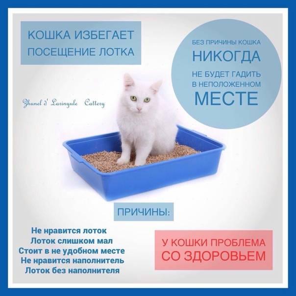 6 признаков того, что ваша кошка нуждается в помощи