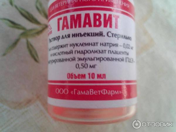 Гамавит 10 мл - купить, цена и аналоги, инструкция по применению, отзывы в интернет ветаптеке добропесик