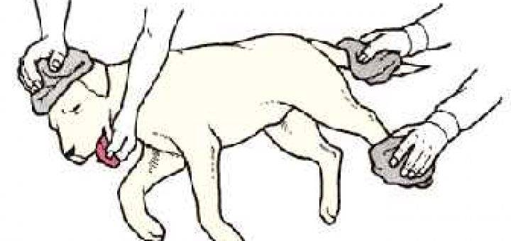 Что делать, если вы обнаружили у кошки кровь