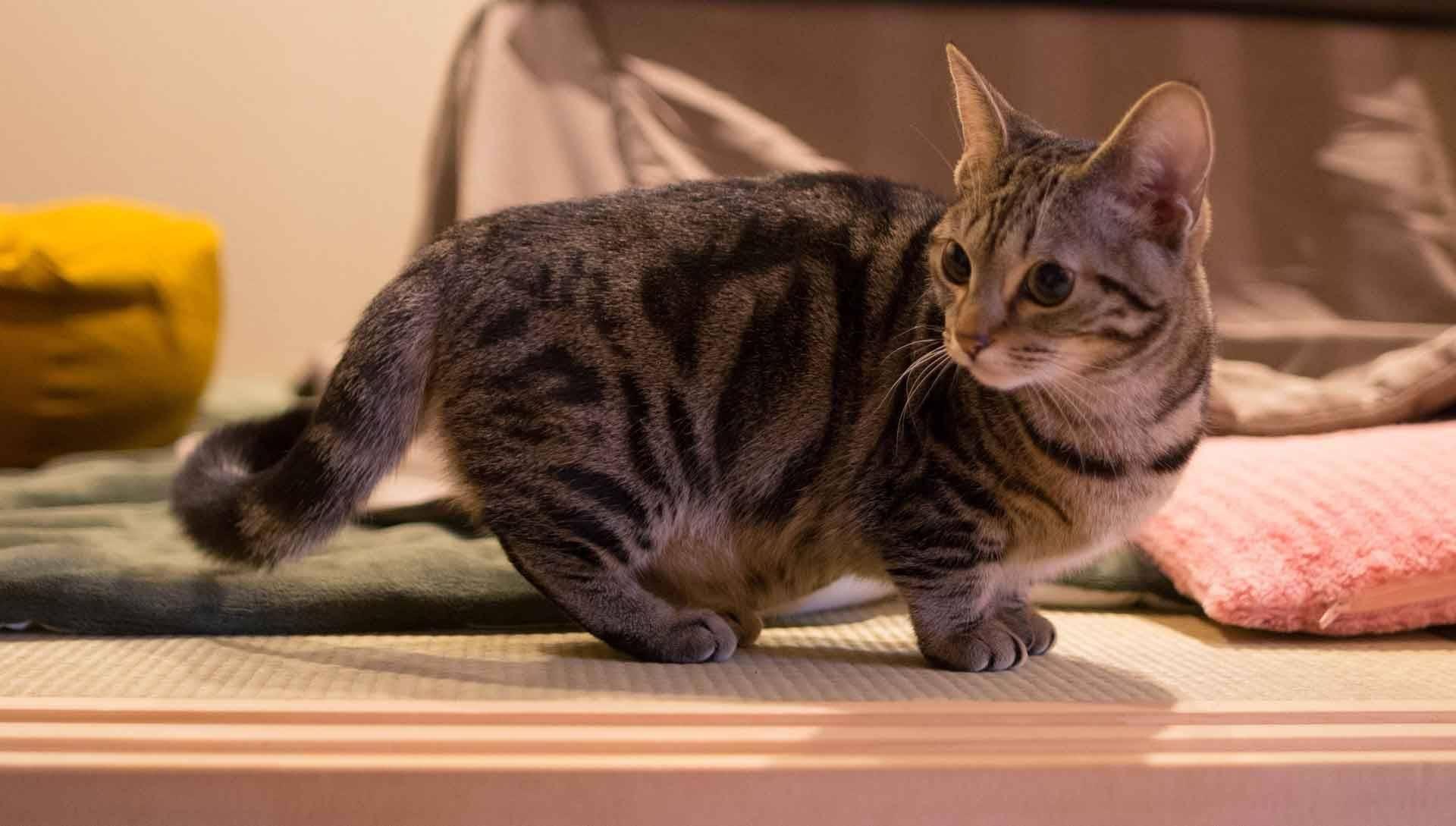 Порода самой маленькой кошки в мире, фото с названиями