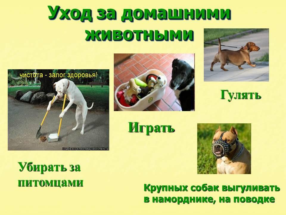 Пушистые собаки: как ухаживать?